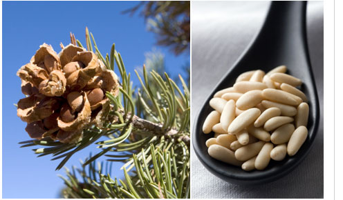 Pinon Nuts come from Pinon trees which grow wild on 38,000,000 million acres of public land in the southwerstern United States